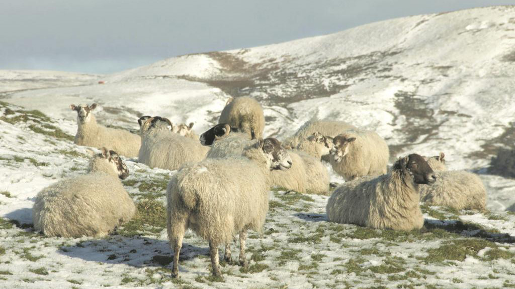 Agriculture in crisis as spring snow thrashes UK