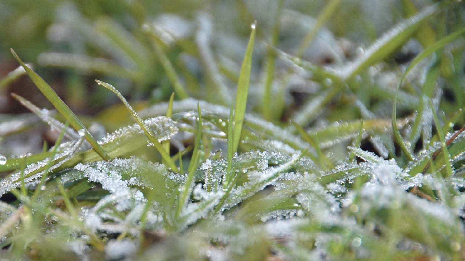 There is a threat of widespread frost during the nights