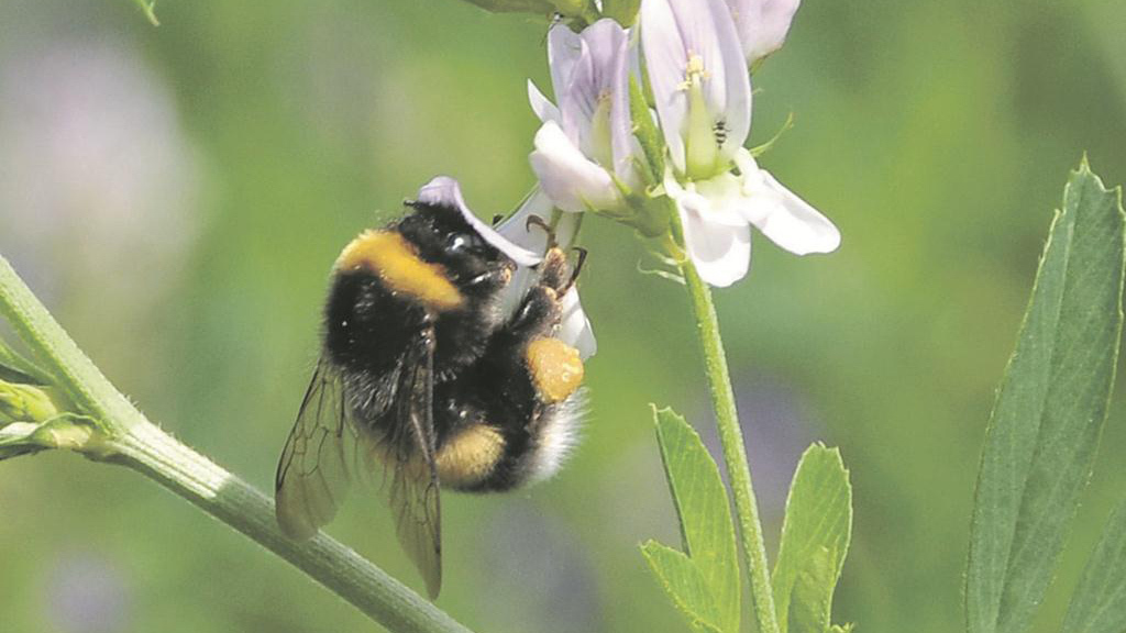 NFU hits back at claims fungicides are harming bees