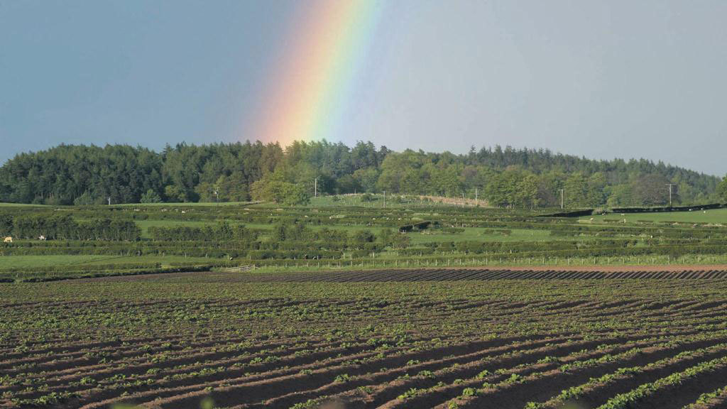 CHANGEABLE WEATHER BRINGS STOP-START SPRING FOR GROWERS