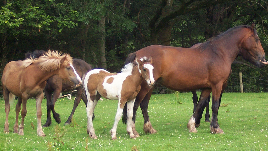 How safe is your grass for a horse to graze?
