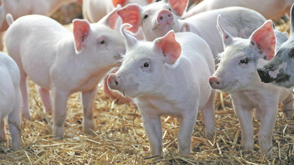 Rapid reduction of antibiotics 'a danger to animals'