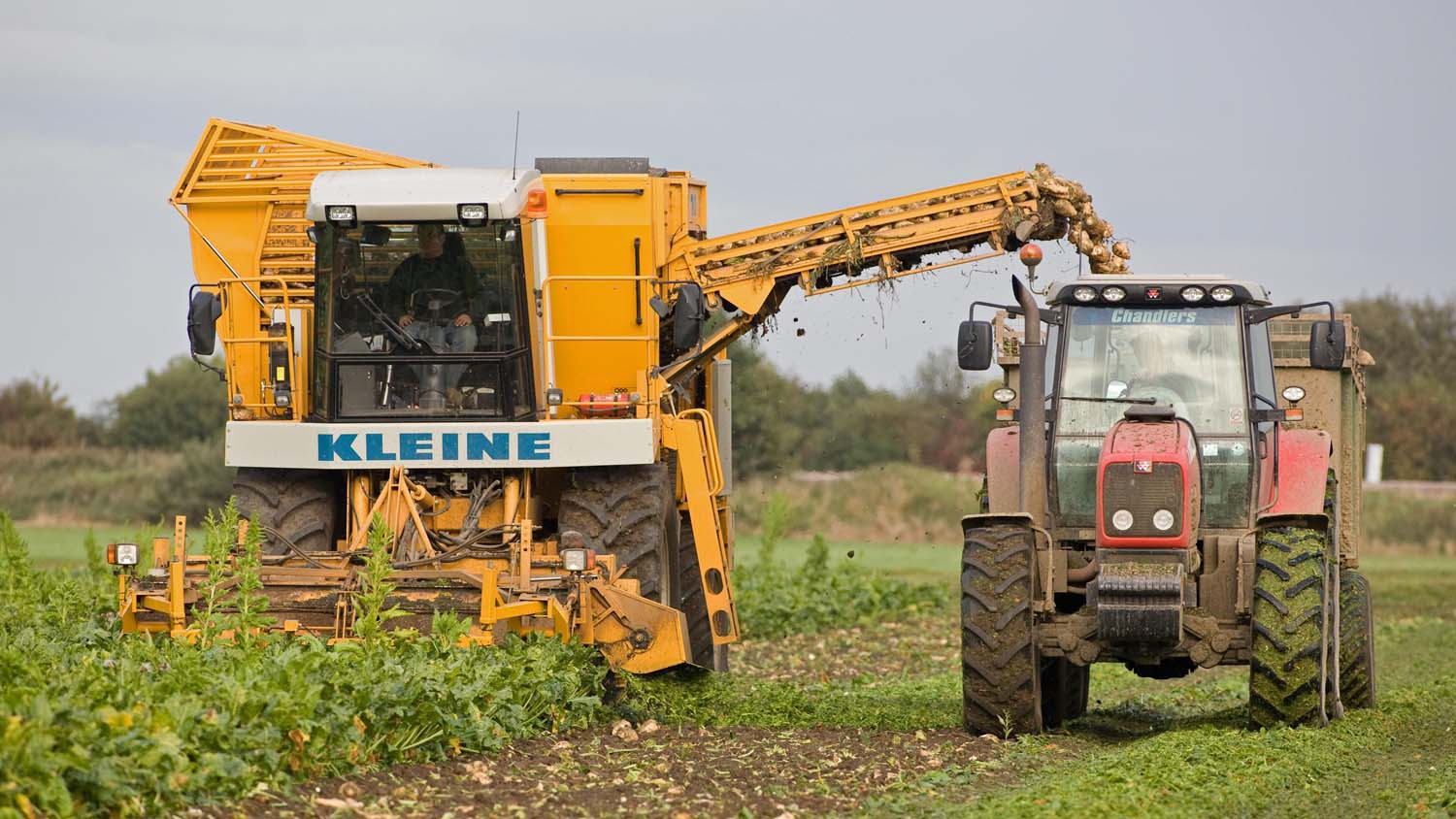Sugar beet growers may be able to mix different contracts for proportions of their crop