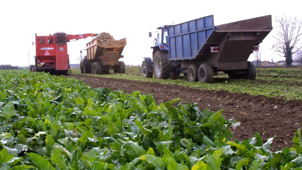 How to minimise beet root breakage in dry conditions