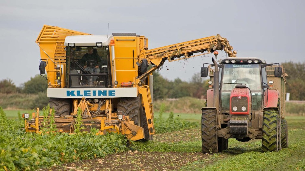 Beet prospects uncertain but no easy alternative options