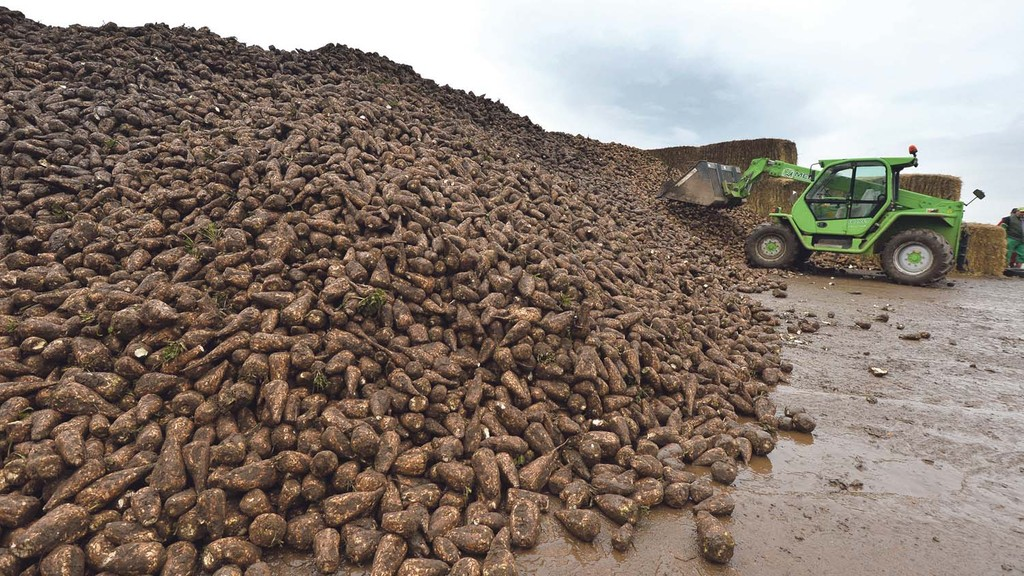 Sugar tariff changes could undermine beet industry