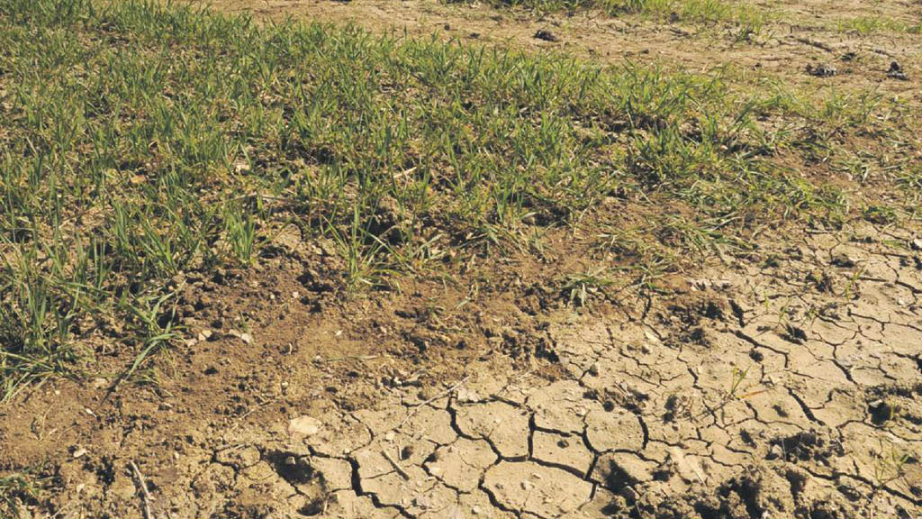 Some UK farmers face risk of potential summer drought, EA warns
