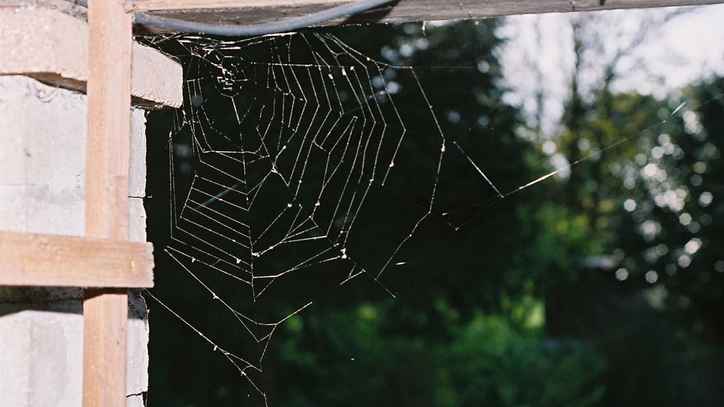 A look at how spider venom can be used to safeguard crop protection
