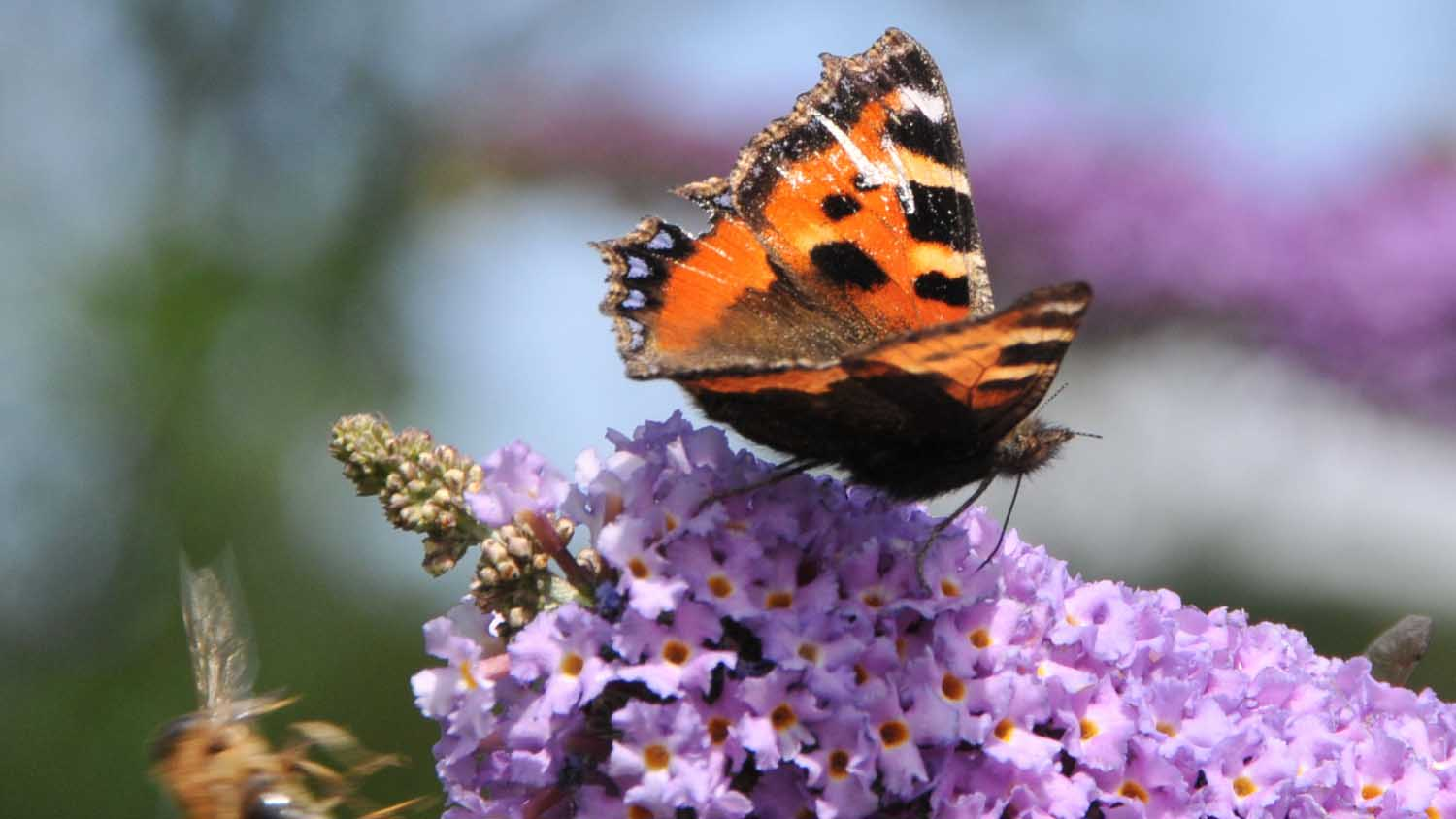 Subsidise butterflies and wildflowers but not food production, says National Trust boss