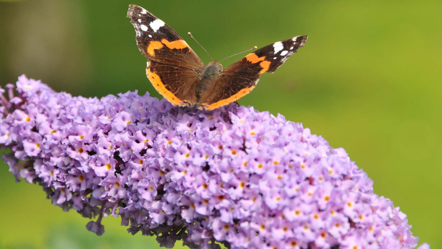 From the editor: Butterflies and flowers will not feed a growing population
