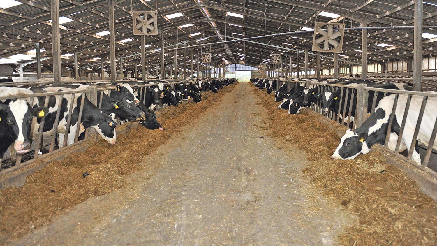 Intelligence Guide: Cutting energy bills on your dairy farm