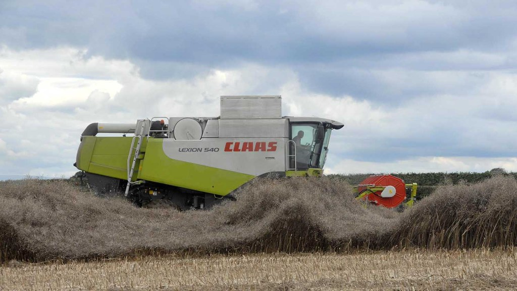 Early OSR RL variety trials show yields 0.49t/ha down on four-year average
