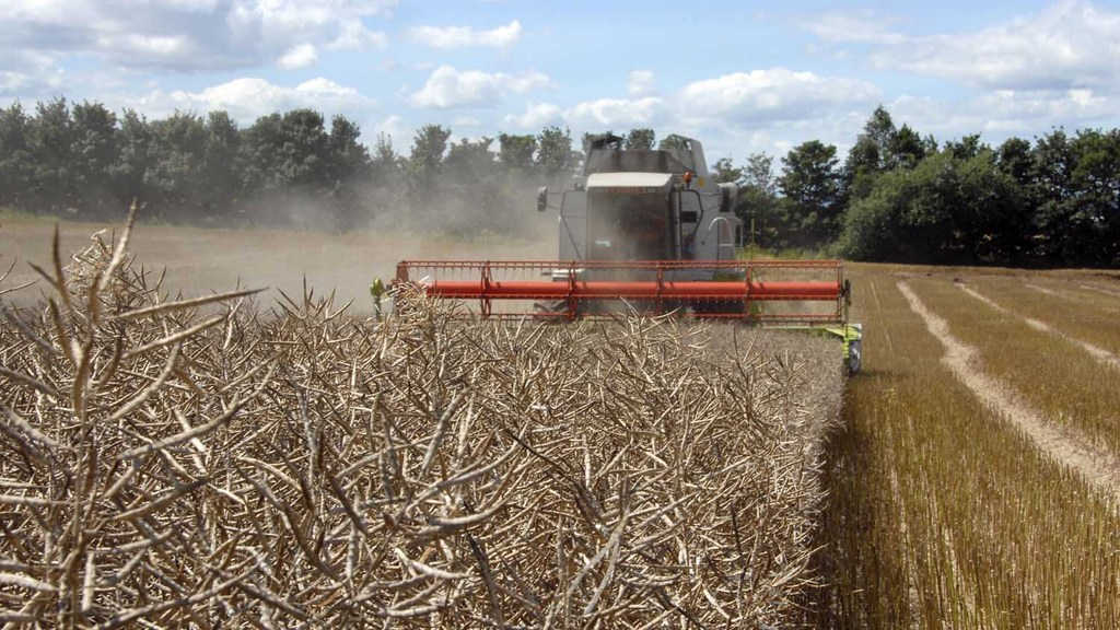 A recipe for top OSR yields