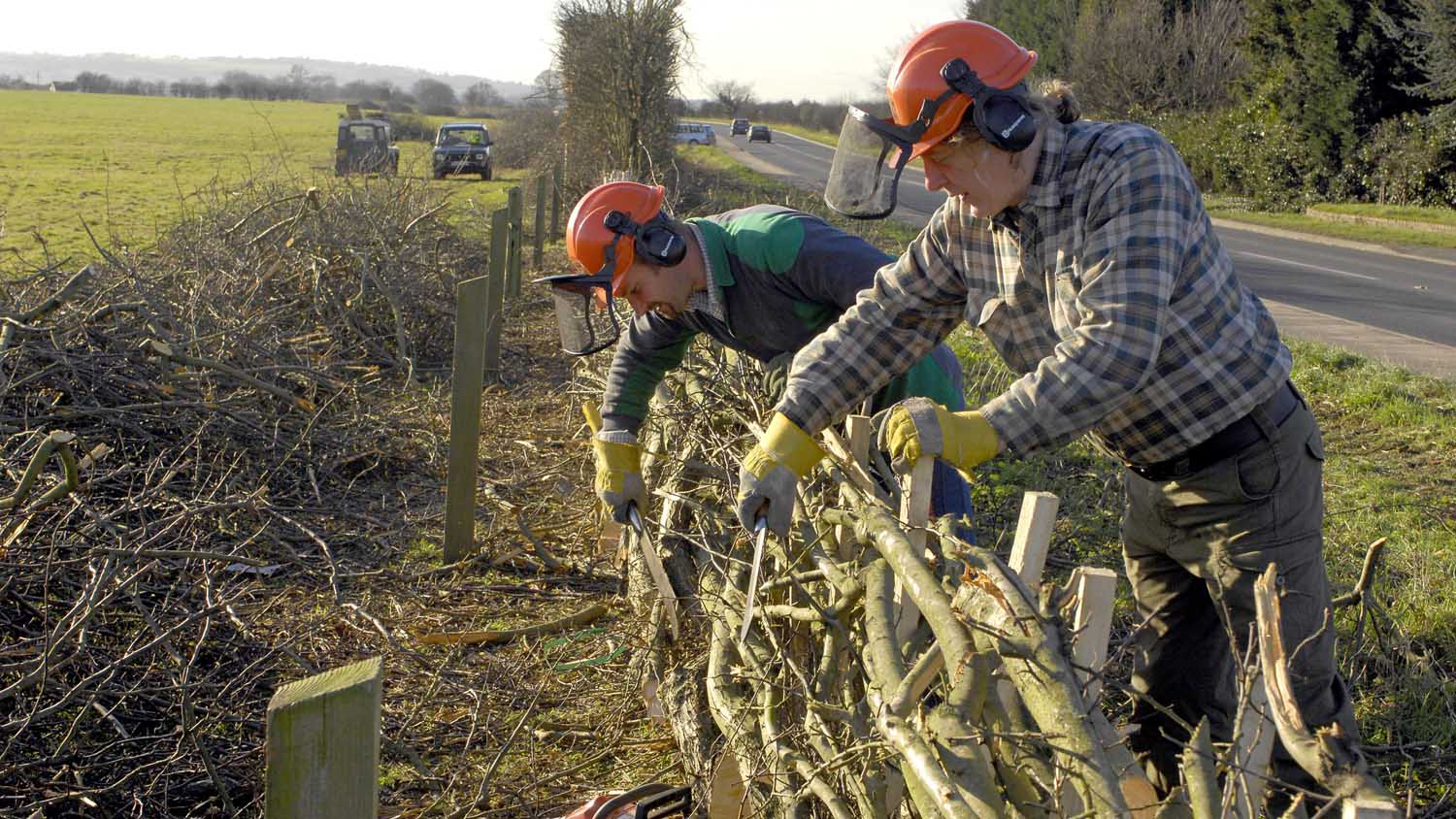 Hedgerows and boundaries maintained thanks to new grant scheme