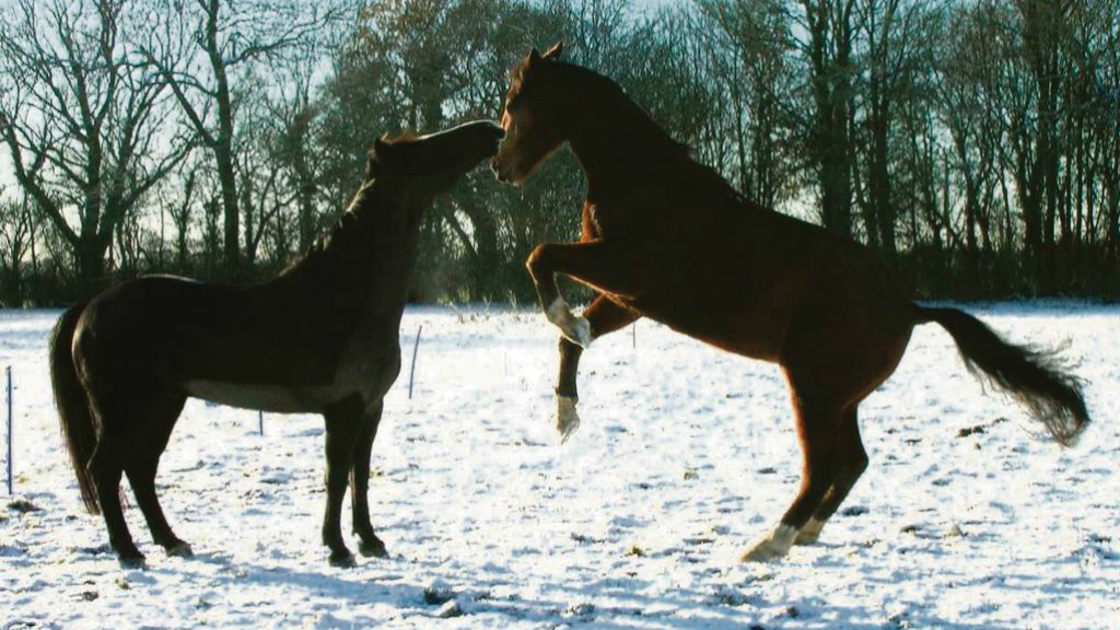 Problems horses face during the difficult winter months