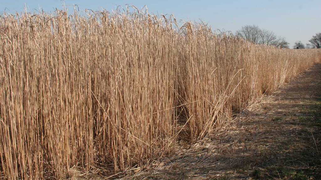 Environmental and economic case for growing miscanthus put forward at agri-renewables event