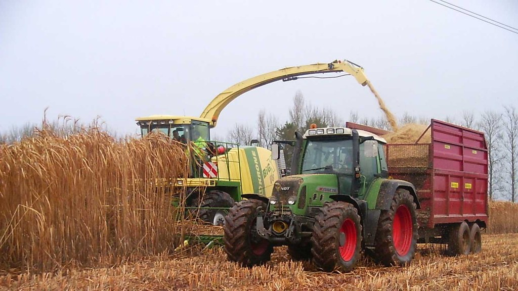 Video: Miscanthus grown from seed available as soon as 2019