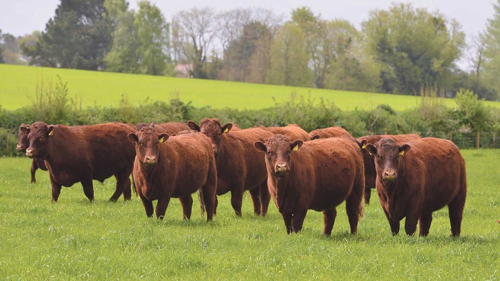 Livestock Round-up: Get your teeth into some beef