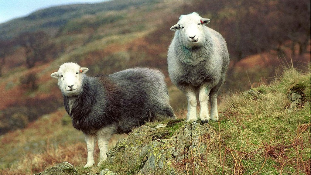 Upland farmers in talks to encourage protection of 'most wonderful' legacy