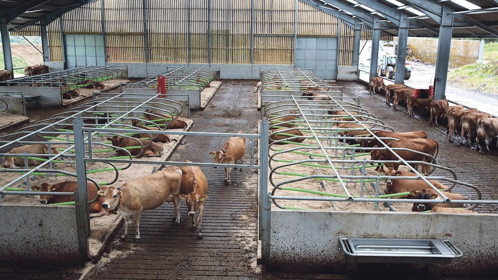 Handy Hints: The best ways to cut your dairy farm energy bills