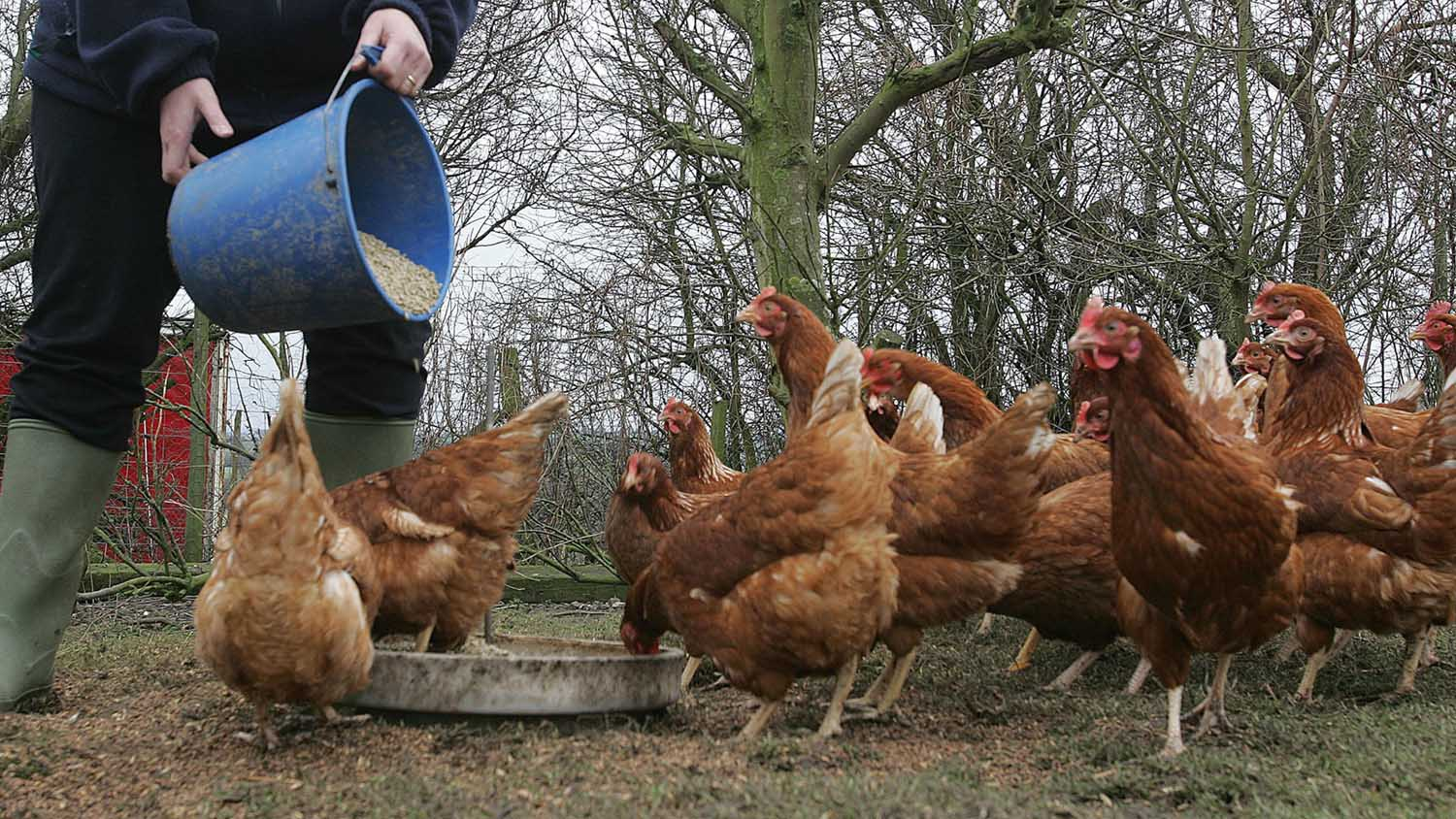 The organic poultry sector has increased 8.5 per cent since 2016 to more than 3 million animals.
