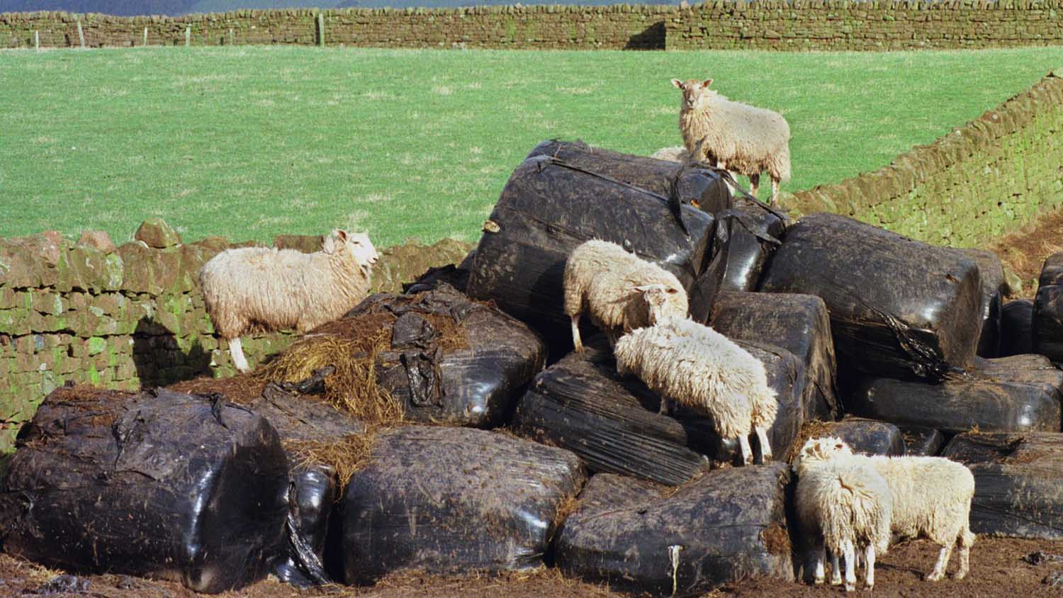 Welsh farmers given three months to register waste exemption