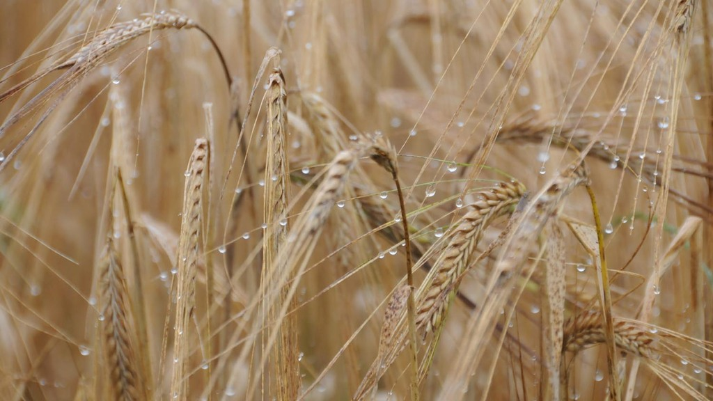 Talking Arable with Iain Green: Harvest Progress