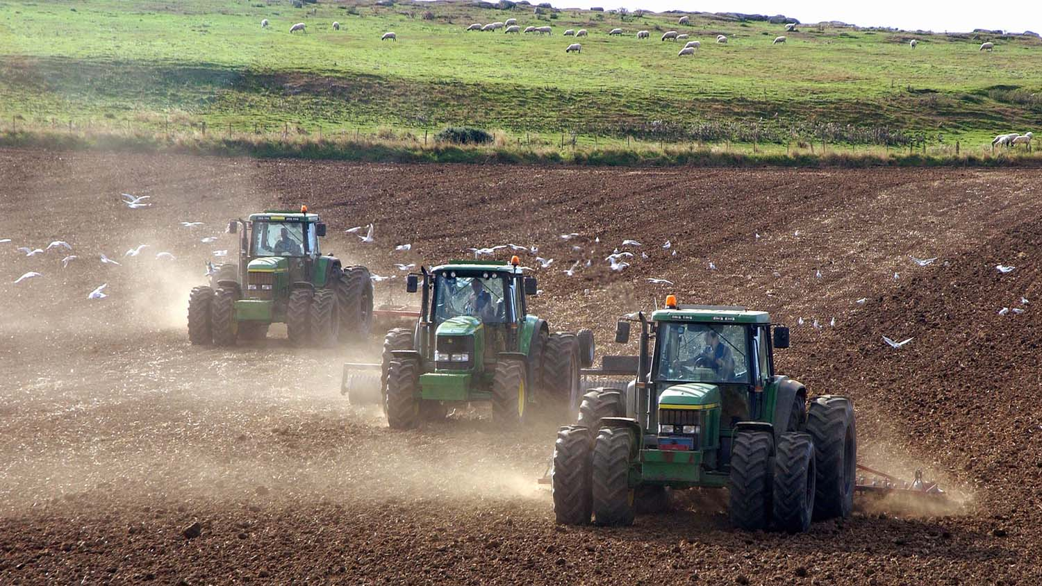 What is the outlook for arable and feed markets in 2016?