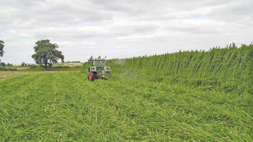 Hemp farming co-op has licence revoked