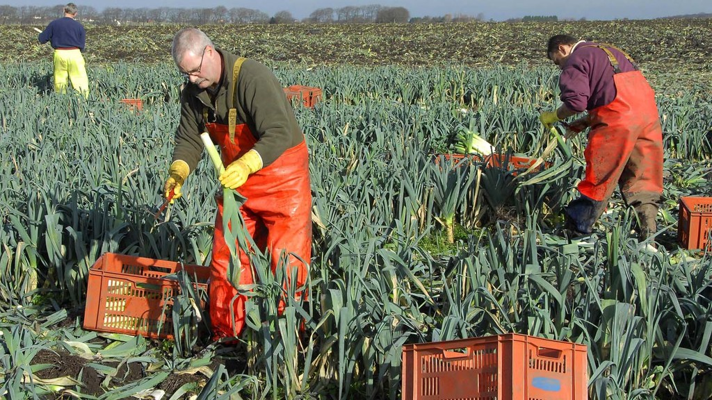 NFU calls on MPs for continued access to labour