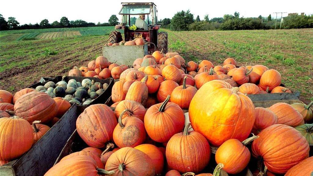 #PumpkinRescue campaign tackles food waste