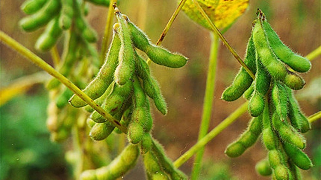 The EU imports an estimated €12 billion (£8.6bn) of soya each year