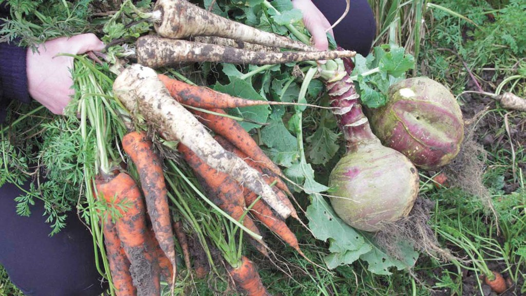 Farmers welcome Government plans to publish a food strategy