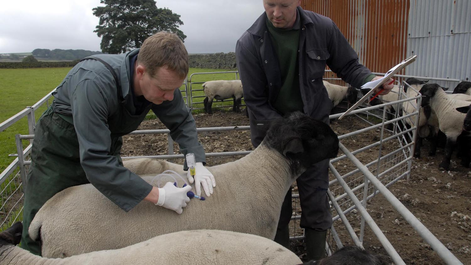 'Watch this space' - Farmers warned risk of bluetongue recirculating