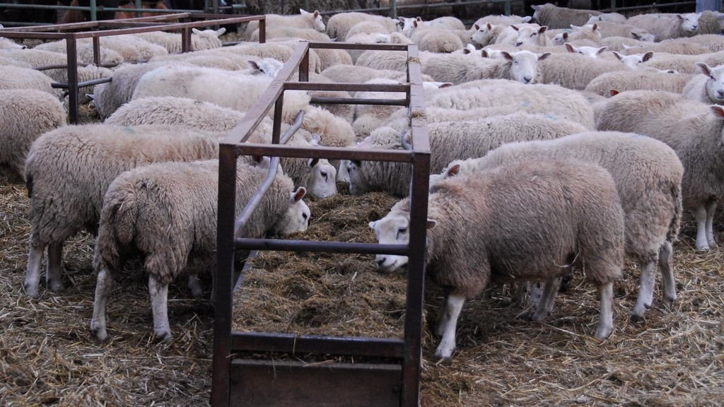 UK lamb could benefit as New Zealand stock tightens