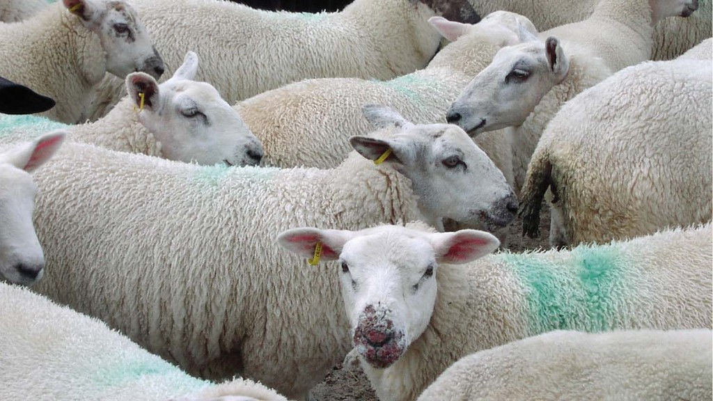 Be wary of Johne's disease in sheep