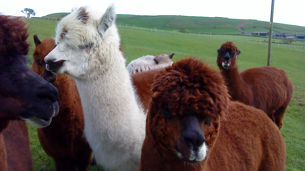 New test launched to improve TB detection in camelids