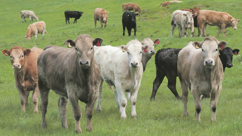 More than 30,000 cattle were slaughtered because of bTB in 2014