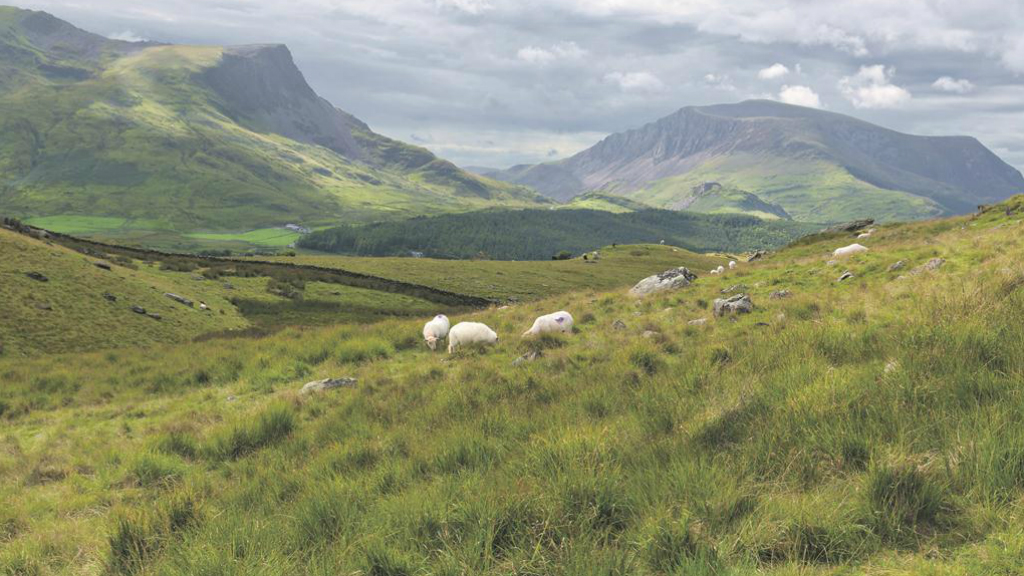 Anger as Welsh upland scheme ruled out