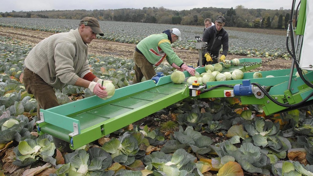 Think tank tells ministers to ignore calls for a seasonal agricultural workers scheme