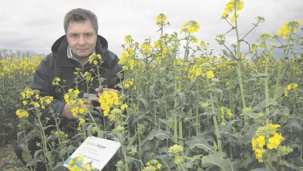 What does the neonicotinoid ban mean for variety choice?