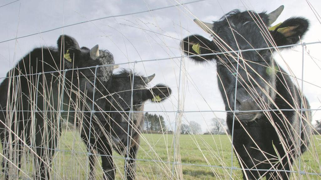 Vet's View: Reasons livestock farmers should quarantine stock