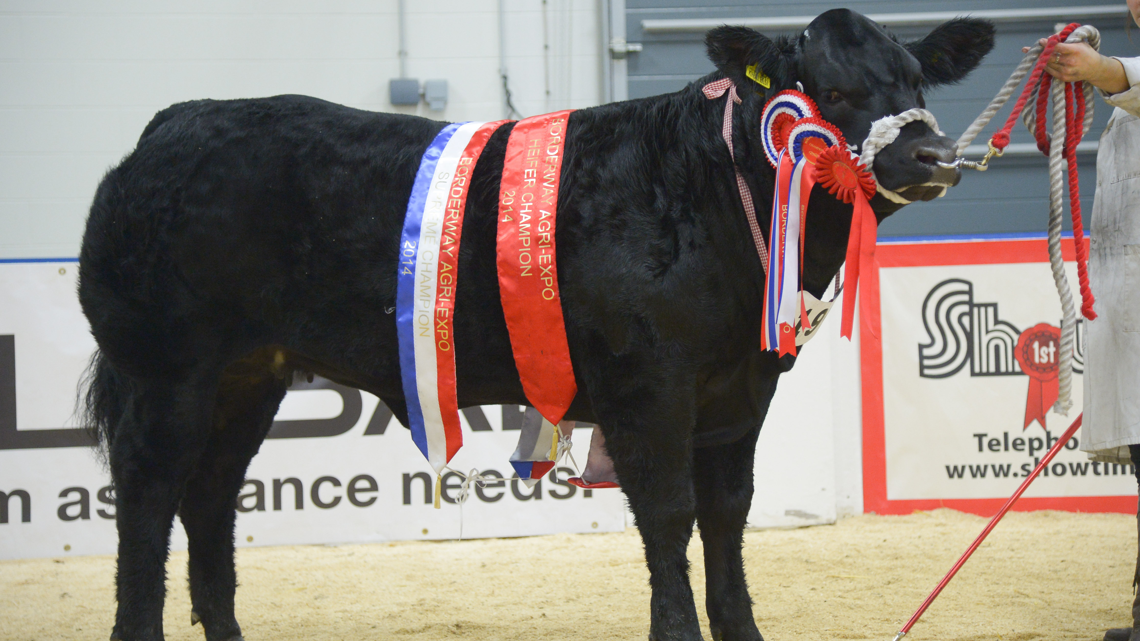 Heifers shine in supreme at Agri-Expo