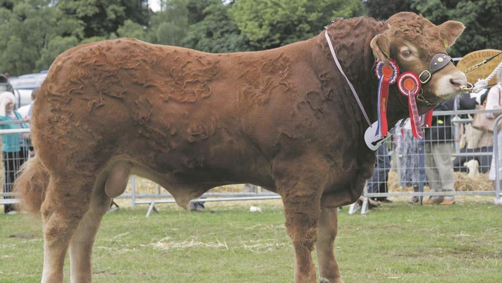Reserve inter-breed beef Turriff