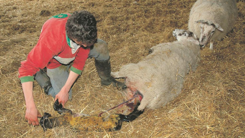 Young people from non-farming backgrounds get new opportunities
