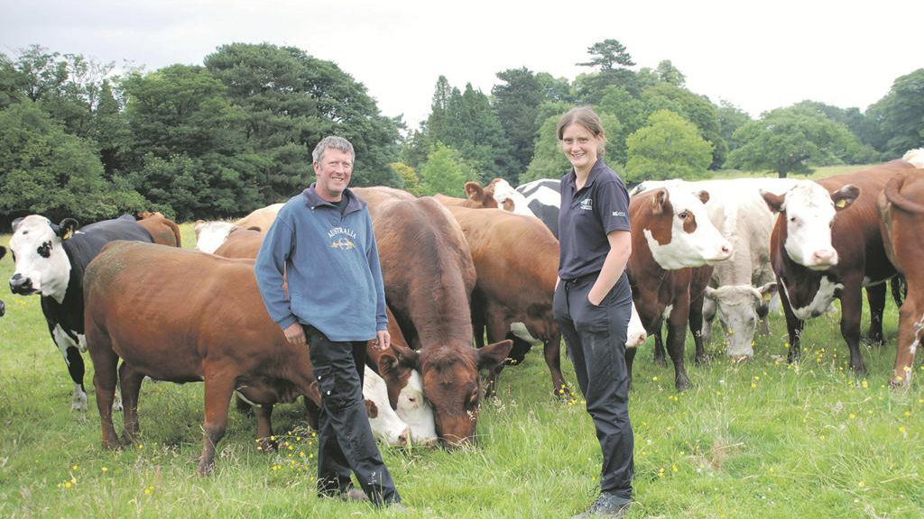 Farm focus: Eliminating BVD boosts beef herd fertility and growth rates