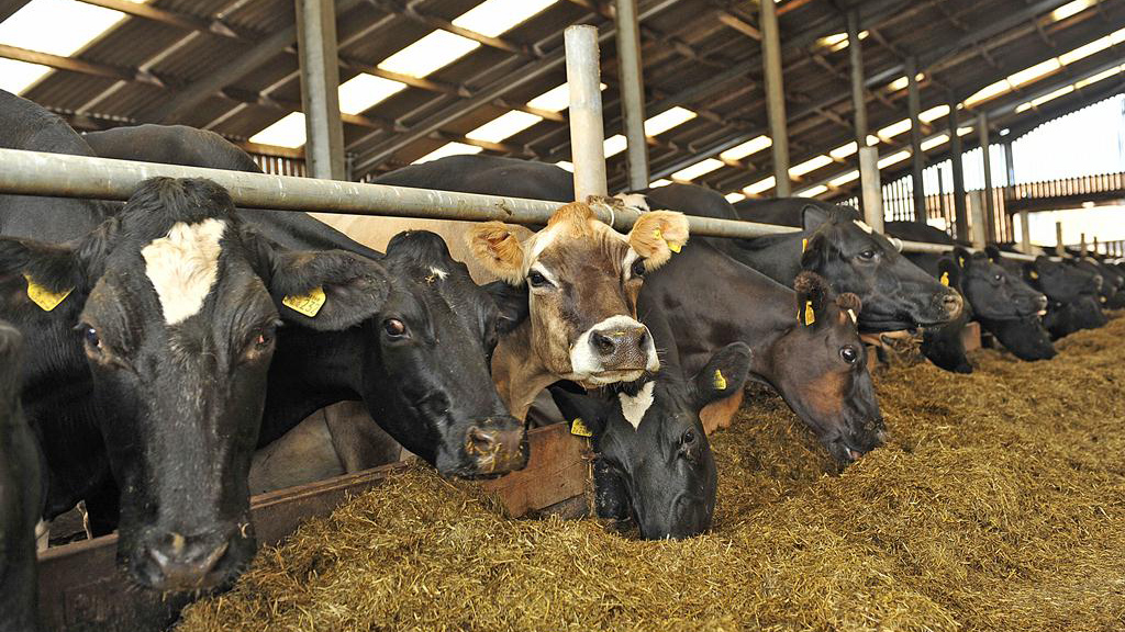 Farm focus: Making the switch from high input to extensive grazing