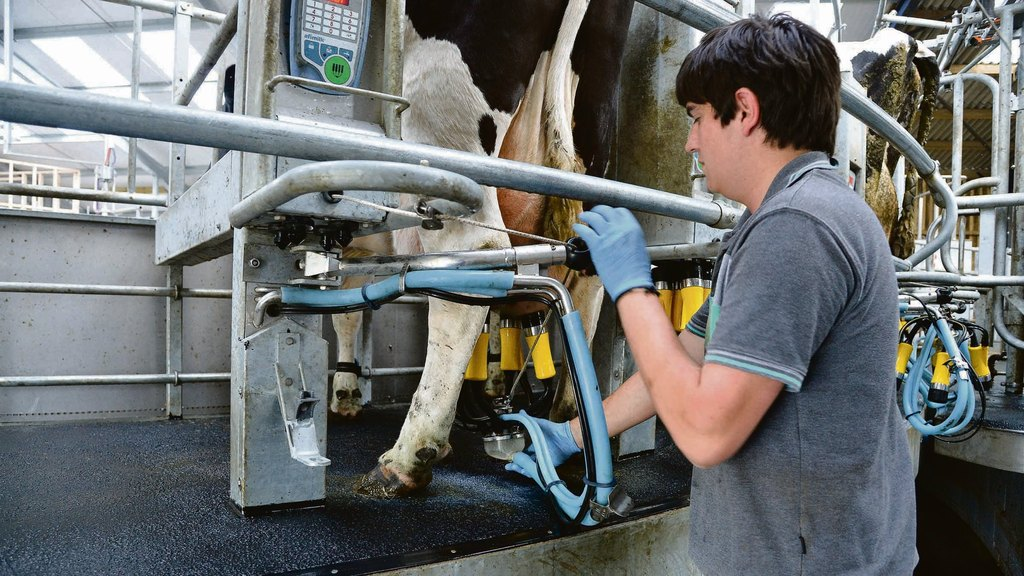 Dairy farmers sell direct to public in order to boost margins