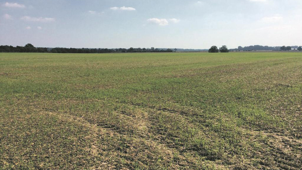 Seven steps for a safe and effective herbicide programme this autumn