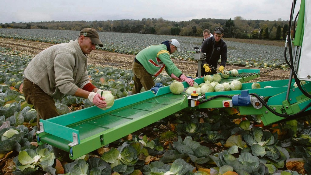 Migrant row could be harming farming industry